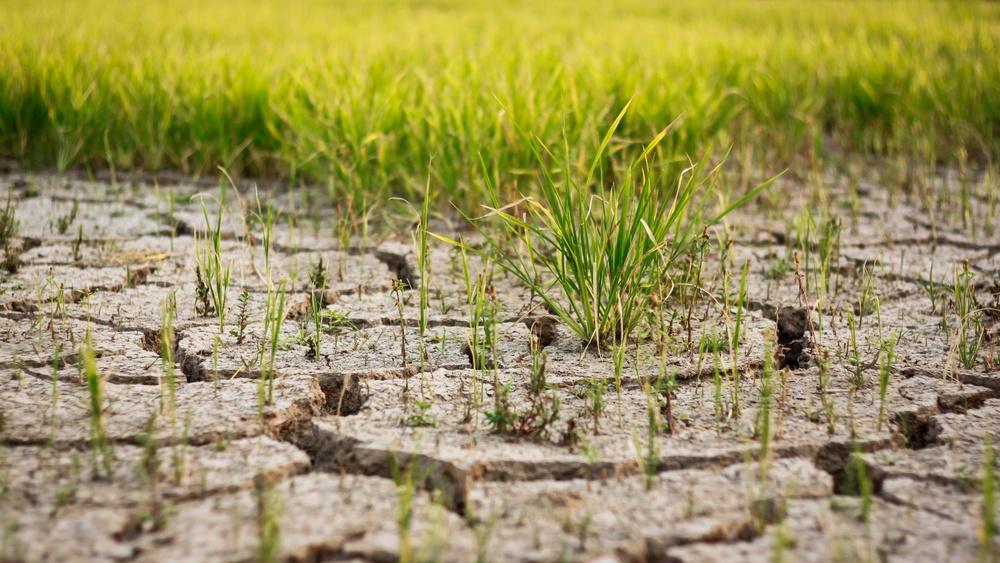 o que é degradação do solo