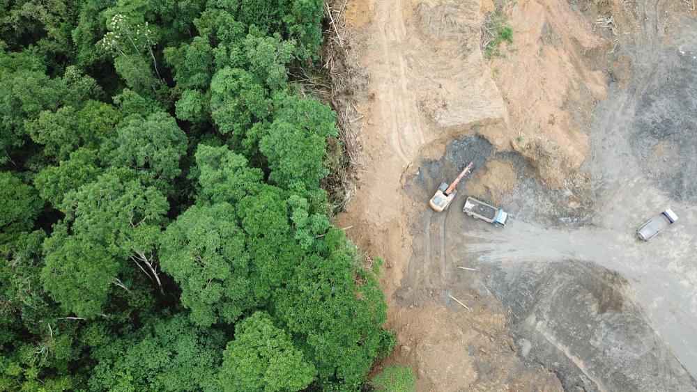 consequências do desmatamento