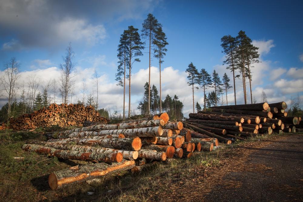 causas do desmatamento