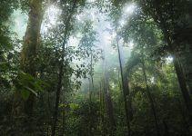 o que é floresta tropical